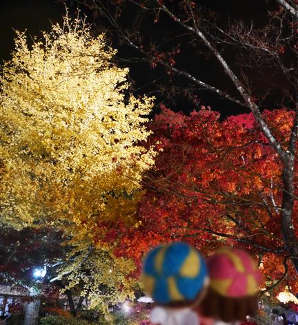 紅葉 もみじ 秋 山梨 落ち葉 河口湖 紅葉回路 バスケ エルトラック ブログ